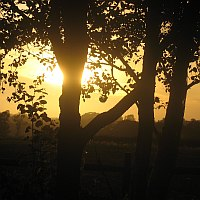 sun setting behind hazel tree in silhouette